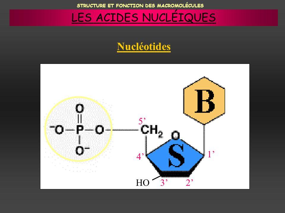 STRUCTURE ET FONCTION DES MACROMOLÉCULES Nucléotides HO23 4 5 1 LES ACIDES NUCLÉIQUES