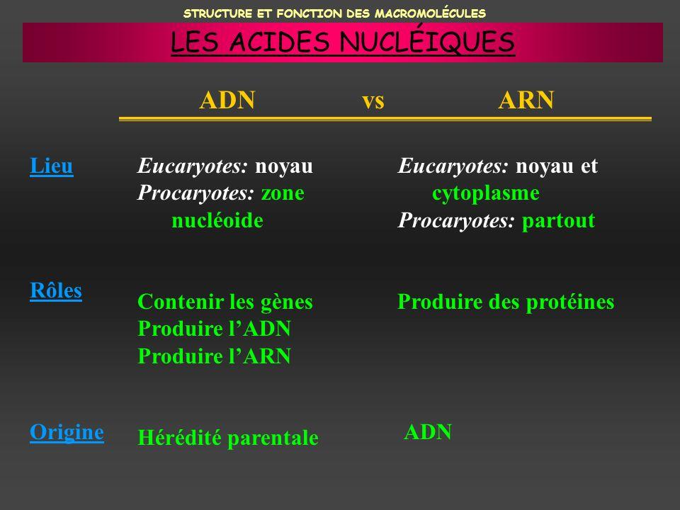 STRUCTURE ET FONCTION DES MACROMOLÉCULES ADN vs ARN Lieu Rôles Origine Eucaryotes: noyau Procaryotes: zone nucléoide Eucaryotes: noyau et cytoplasme P
