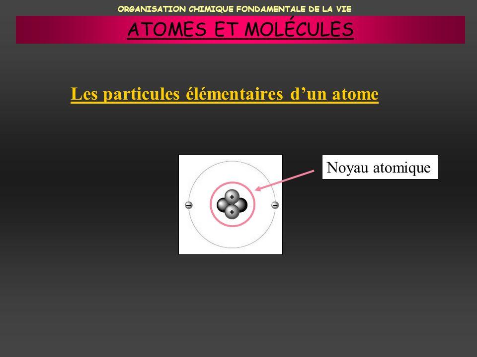 ORGANISATION CHIMIQUE FONDAMENTALE DE LA VIE Les particules élémentaires dun atome Noyau atomique ATOMES ET MOLÉCULES