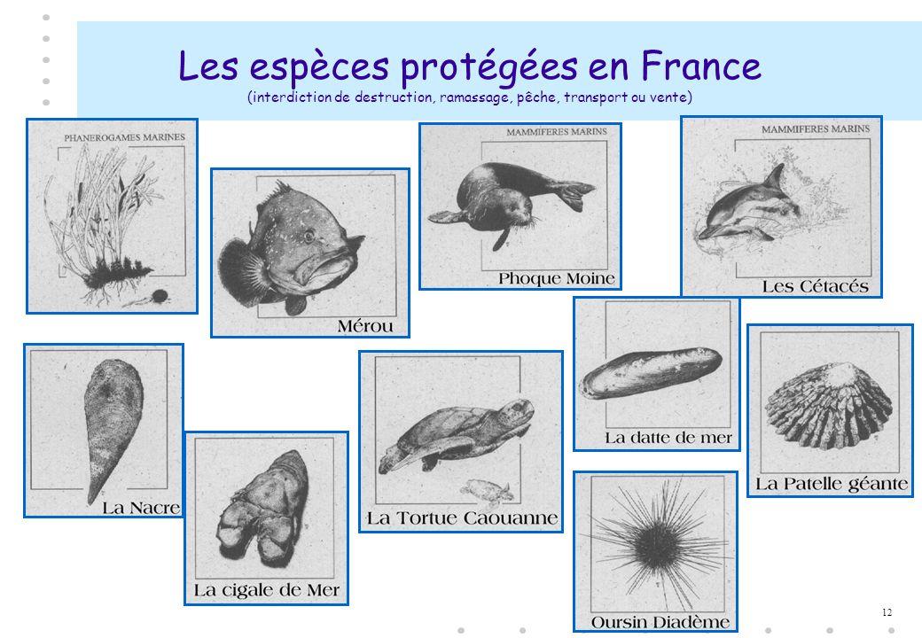 12 Les espèces protégées en France (interdiction de destruction, ramassage, pêche, transport ou vente)