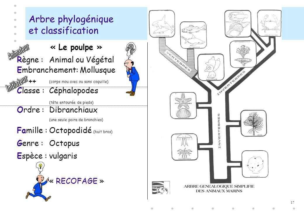 17 Arbre phylogénique et classification « Le poulpe » Règne :Animal ou Végétal Embranchement: Mollusque (corps mou avec ou sans coquille) Classe :Céph