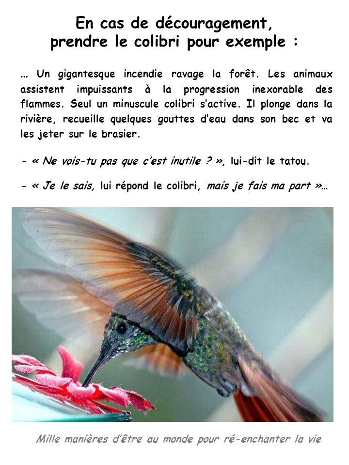 Mille manières dêtre au monde pour ré-enchanter la vie En cas de découragement, prendre le colibri pour exemple : … Un gigantesque incendie ravage la forêt.