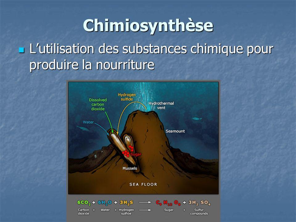 Chimiosynthèse Lutilisation des substances chimique pour produire la nourriture Lutilisation des substances chimique pour produire la nourriture