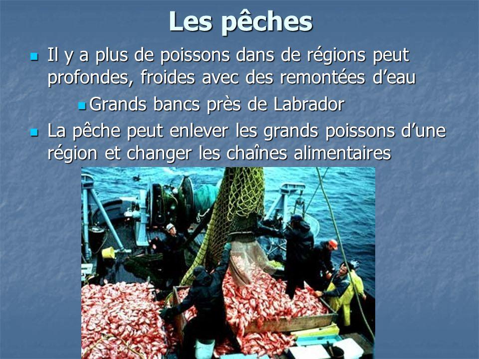 Les pêches Il y a plus de poissons dans de régions peut profondes, froides avec des remontées deau Il y a plus de poissons dans de régions peut profondes, froides avec des remontées deau Grands bancs près de Labrador Grands bancs près de Labrador La pêche peut enlever les grands poissons dune région et changer les chaînes alimentaires La pêche peut enlever les grands poissons dune région et changer les chaînes alimentaires