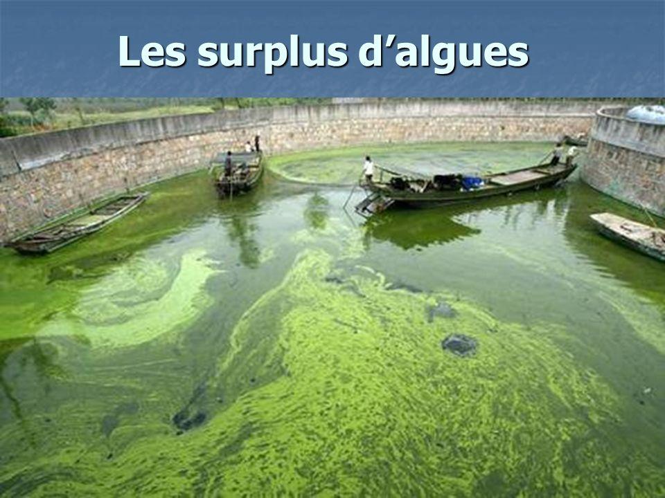 Les surplus dalgues