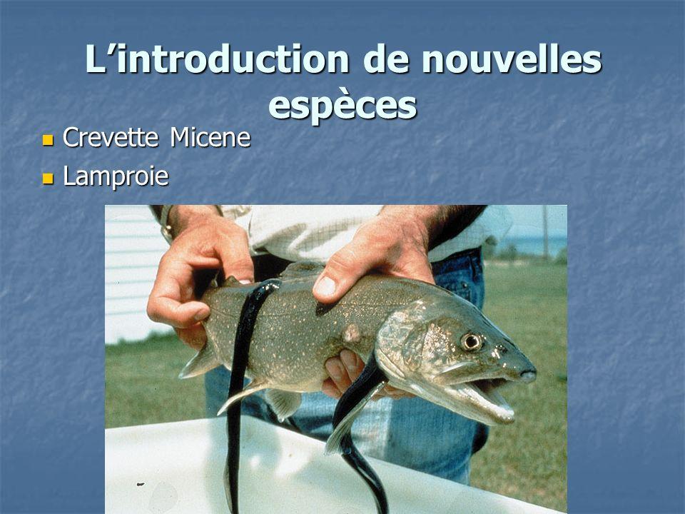 Lintroduction de nouvelles espèces Crevette Micene Crevette Micene Lamproie Lamproie