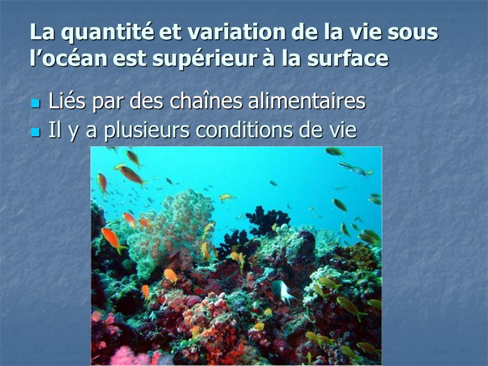 La quantité et variation de la vie sous locéan est supérieur à la surface Liés par des chaînes alimentaires Liés par des chaînes alimentaires Il y a p