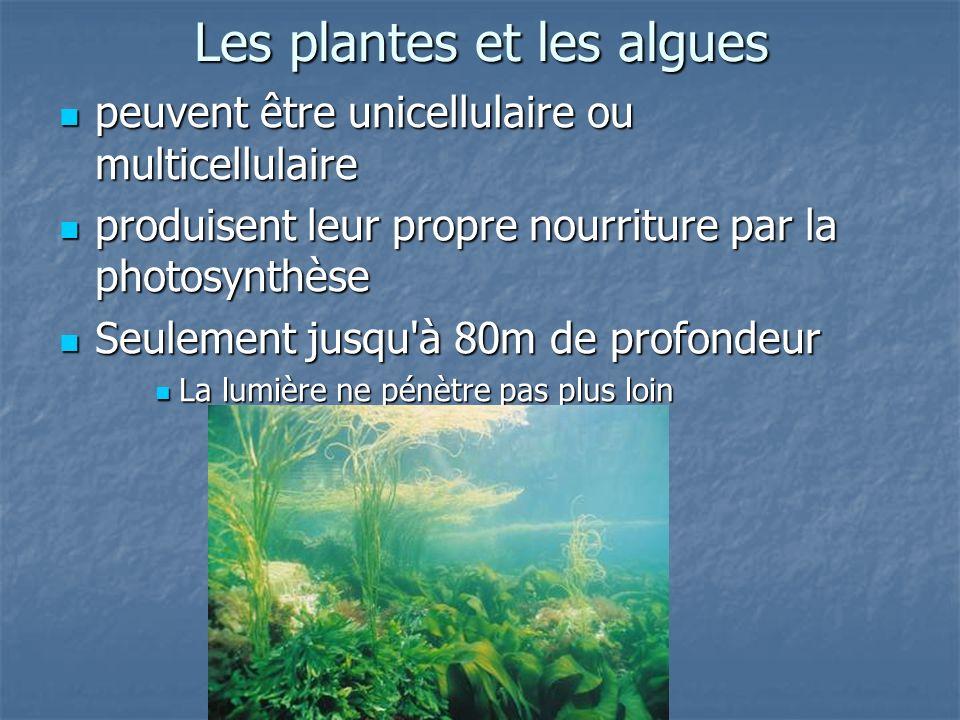 Les plantes et les algues peuvent être unicellulaire ou multicellulaire peuvent être unicellulaire ou multicellulaire produisent leur propre nourriture par la photosynthèse produisent leur propre nourriture par la photosynthèse Seulement jusqu à 80m de profondeur Seulement jusqu à 80m de profondeur La lumière ne pénètre pas plus loin La lumière ne pénètre pas plus loin