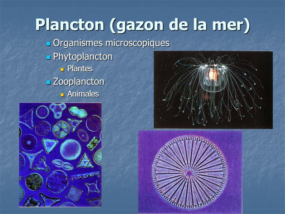 Plancton (gazon de la mer) Organismes microscopiques Organismes microscopiques Phytoplancton Phytoplancton Plantes Plantes Zooplancton Zooplancton Ani