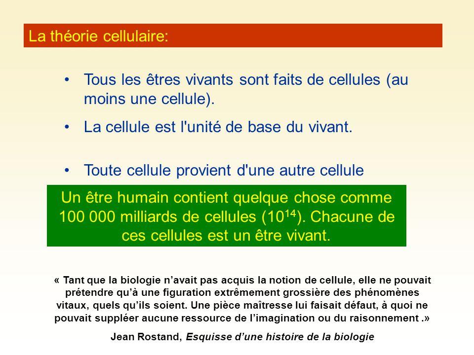 La théorie cellulaire: Tous les êtres vivants sont faits de cellules (au moins une cellule). La cellule est l'unité de base du vivant. Un être humain