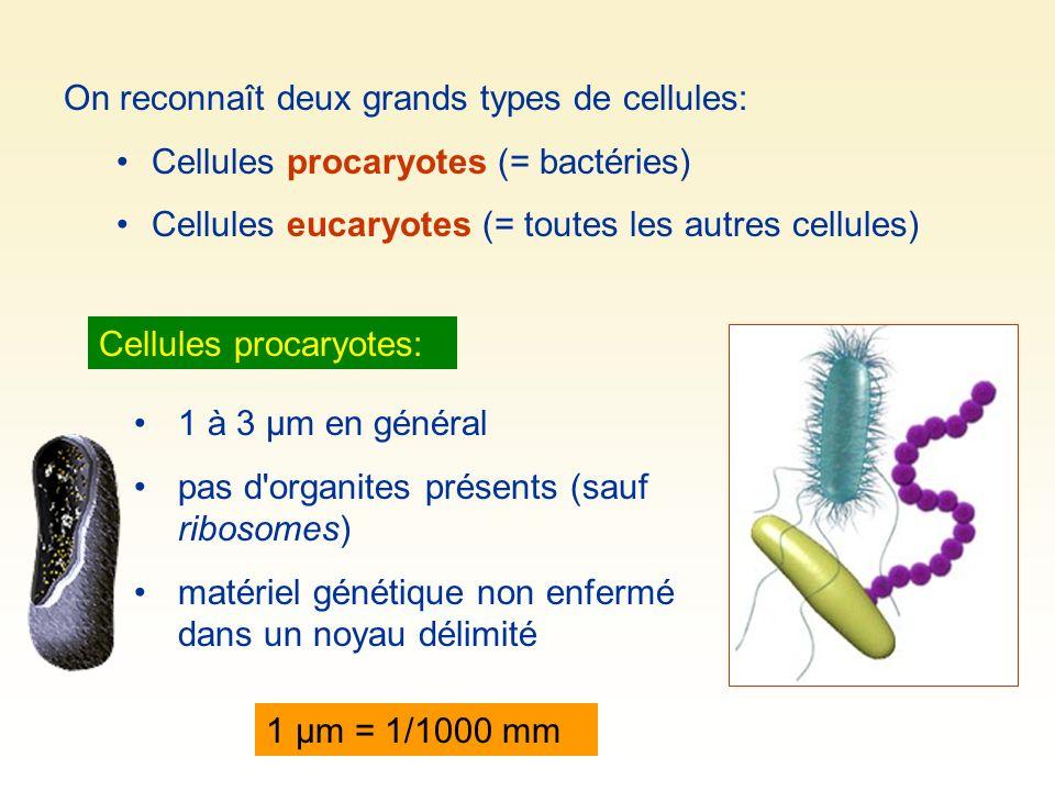 On reconnaît deux grands types de cellules: Cellules procaryotes (= bactéries) Cellules eucaryotes (= toutes les autres cellules) 1 à 3 µm en général