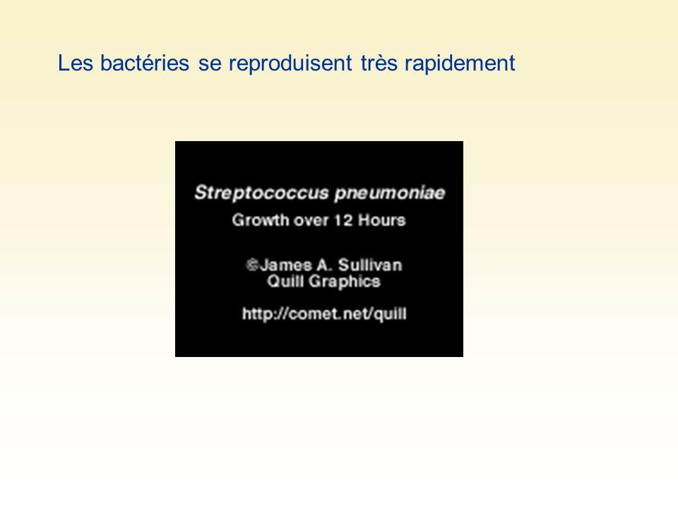 Les bactéries se reproduisent très rapidement