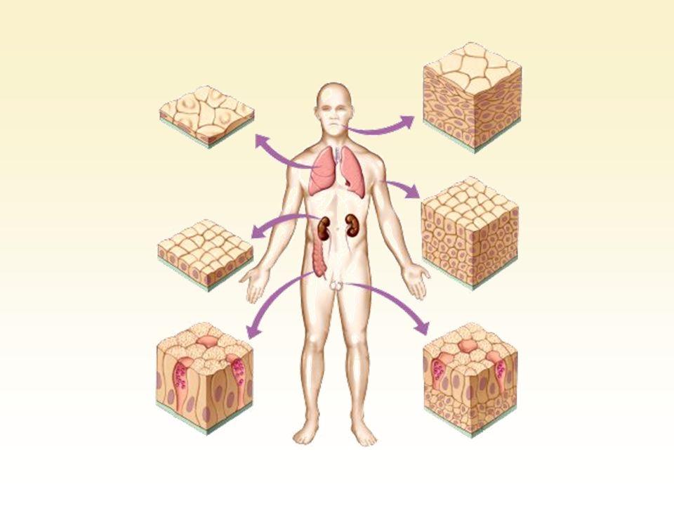 Chimie organique (1-17) Éléments essentiels à la vie: La vie utilise environ 25 des 92 éléments chimiques présents à l état naturel.