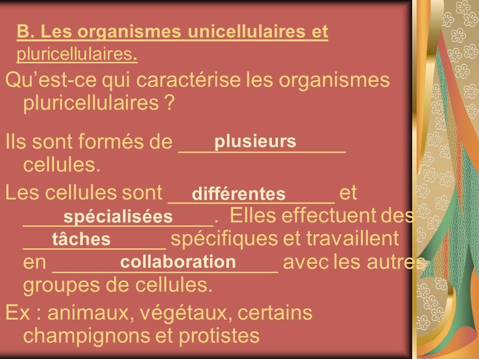 B. Les organismes unicellulaires et pluricellulaires. Quest-ce qui caractérise les organismes pluricellulaires ? Ils sont formés de ______________ cel