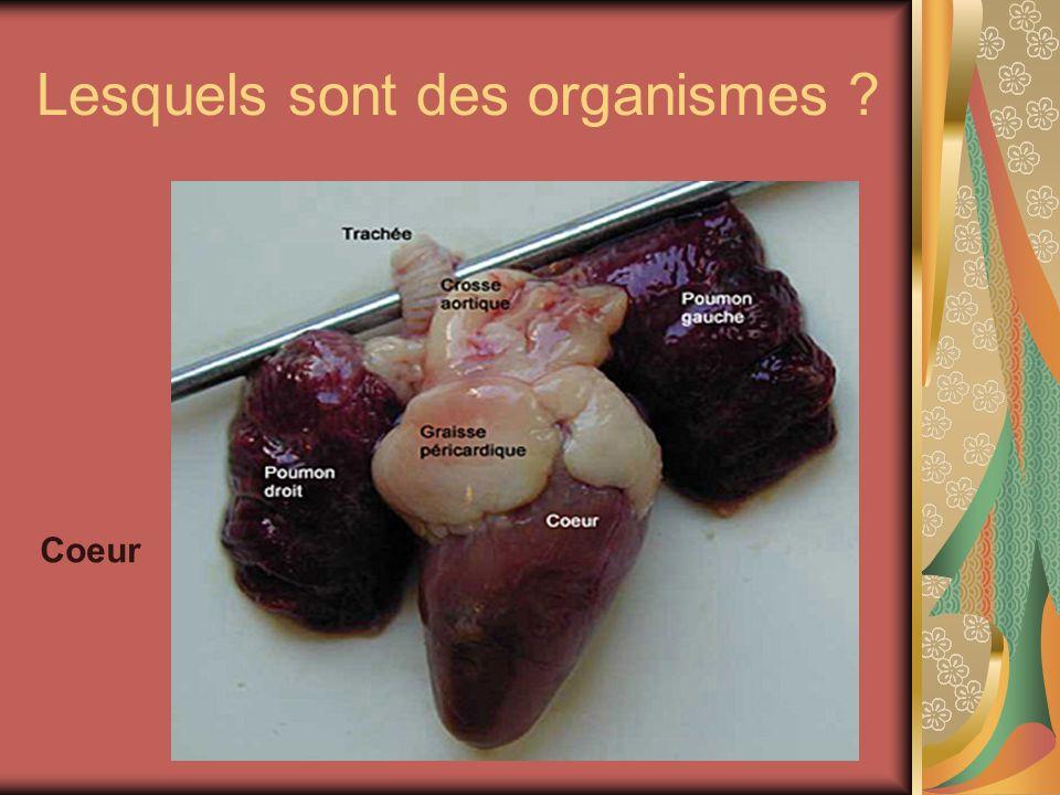 Lesquels sont des organismes ? Coeur