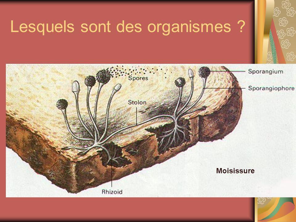 Lesquels sont des organismes ? Moisissure