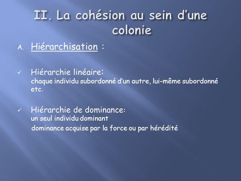 Colonies temporaires Colonies formées quà certaines périodes de lannée Essentiellement pour la reproduction Grandes migrations Colonies sédentaires (f