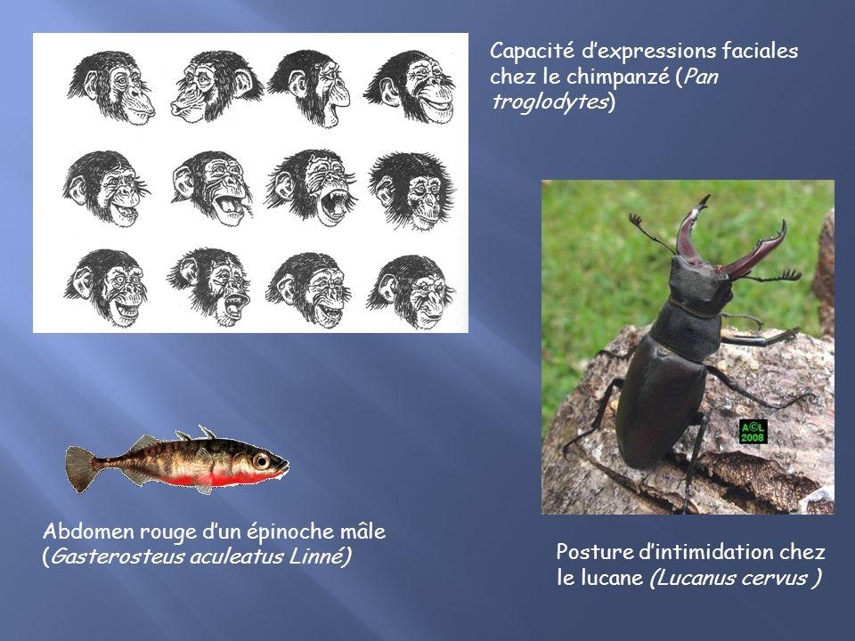 B. La communication: La plus utilisée Grande diversité de signaux visuels: Caractéristiques morphologiques: couleurs Mouvements expressifs: postures c
