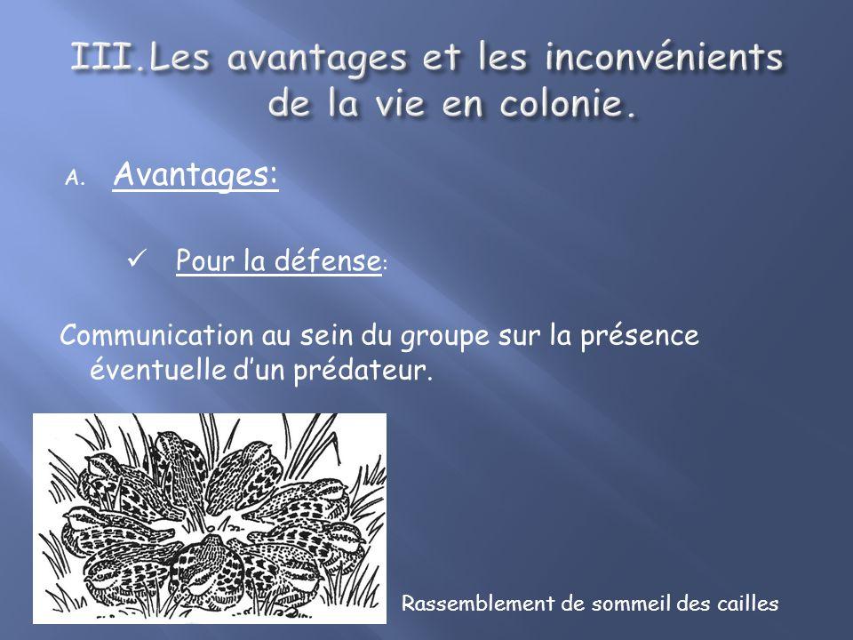 B.Avantages: Pour la défense : Un individu se sert du groupe comme dune couverture.
