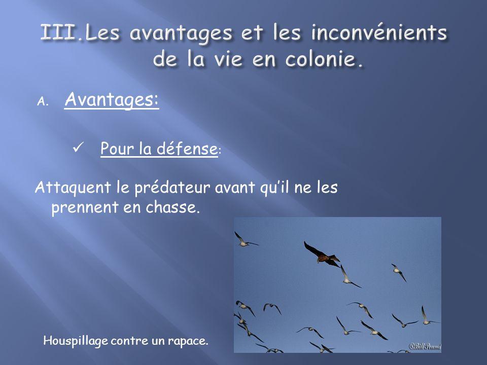 A. Avantages: Pour la défense : Communication au sein du groupe sur la présence éventuelle dun prédateur. Rassemblement de sommeil des cailles