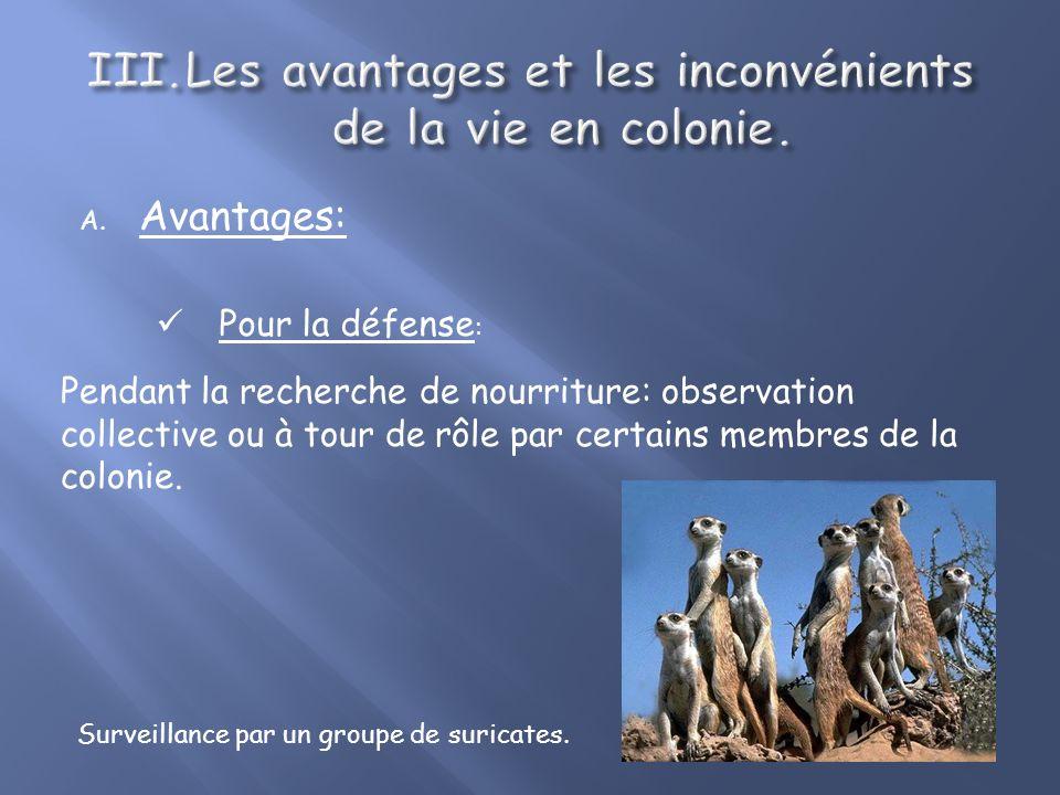 A. Avantages: Pour la défense : Attaquent le prédateur avant quil ne les prennent en chasse. Houspillage contre un rapace.
