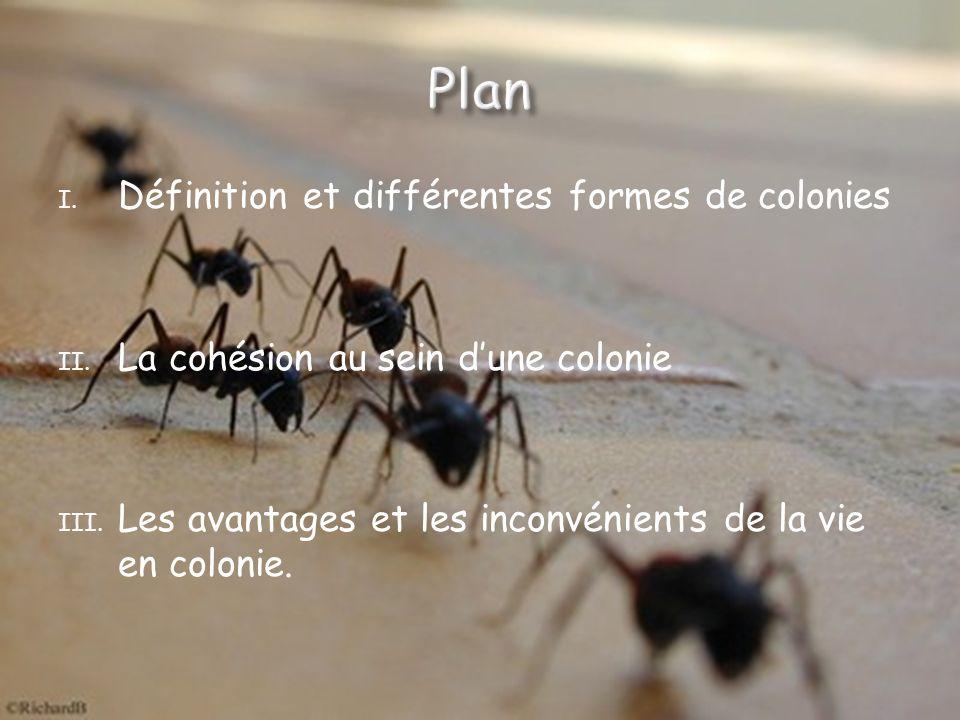 La plupart des espèces animales vivent en colonies.