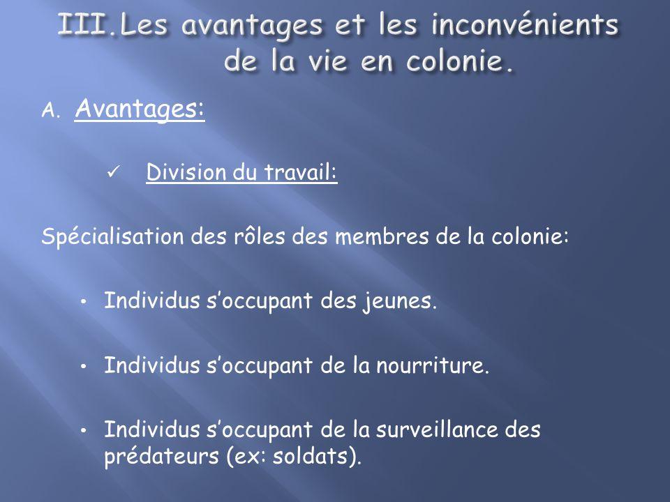 A. Avantages: Pour la reproduction: Elevage communautaire des petits Nid communautaire des Tisserins (Philetairus socius). Les lionnes sentraident pou
