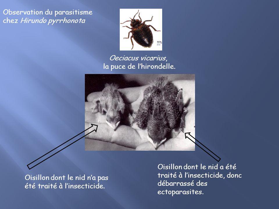 B. Inconvénients: Compétition pour: La nourriture Les femelles Le territoire Propagation facilité dun agent infectieux.