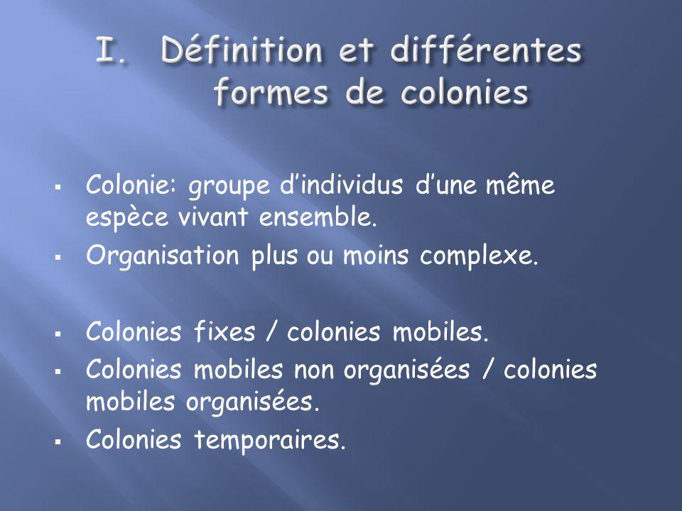 I. Définition et différentes formes de colonies II. La cohésion au sein dune colonie III. Les avantages et les inconvénients de la vie en colonie.