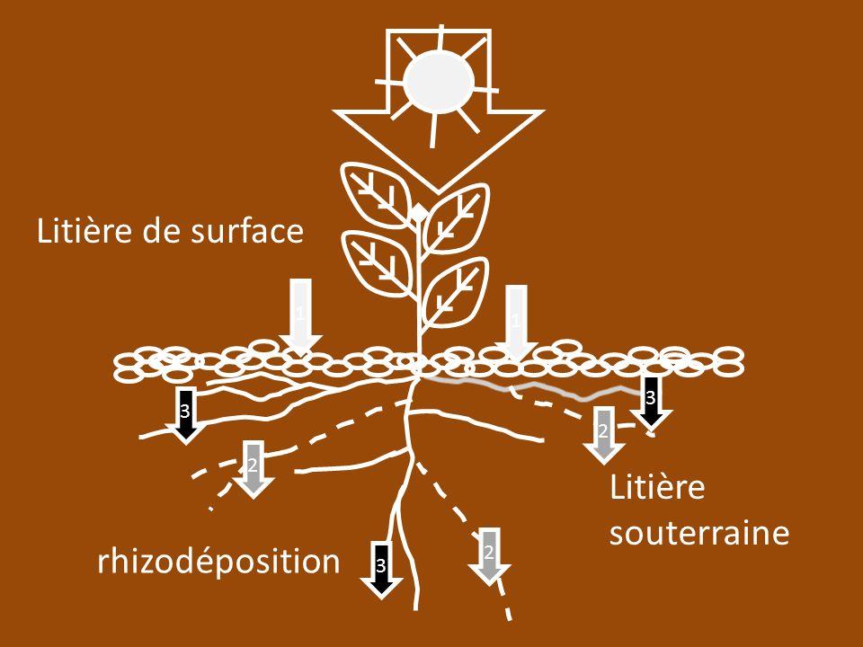 1 1 2 2 2 3 3 3 Litière de surface Litière souterraine rhizodéposition