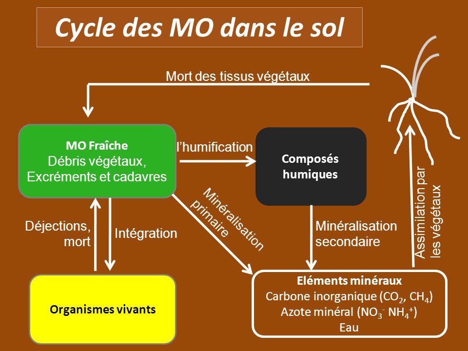 Cycle des MO dans le sol MO Fraîche Débris végétaux, Excréments et cadavres Eléments minéraux Carbone inorganique (CO 2, CH 4 ) Azote minéral (NO 3 -