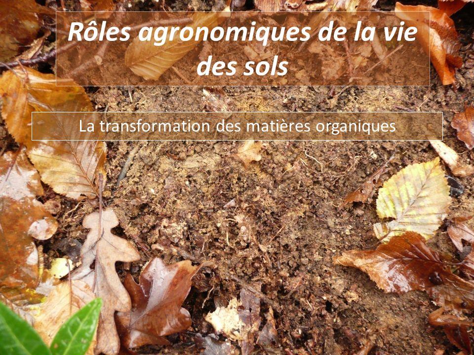 Rôles agronomiques de la vie des sols La transformation des matières organiques
