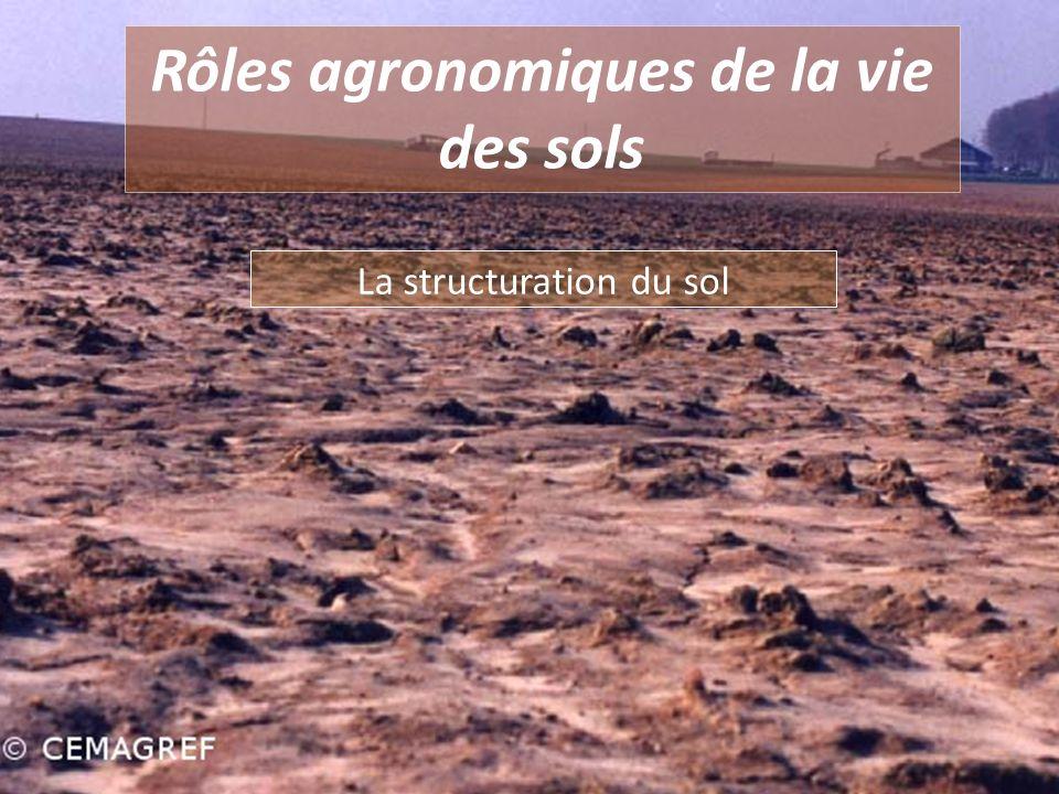 Rôles agronomiques de la vie des sols La structuration du sol