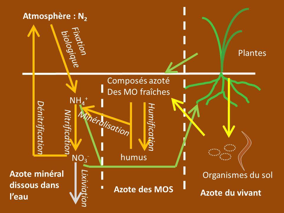 Atmosphère : N 2 Fixation biologique NH 4 + NO 3 - Azote minéral dissous dans leau Azote des MOS Azote du vivant Nitrification Dénitrification Composé
