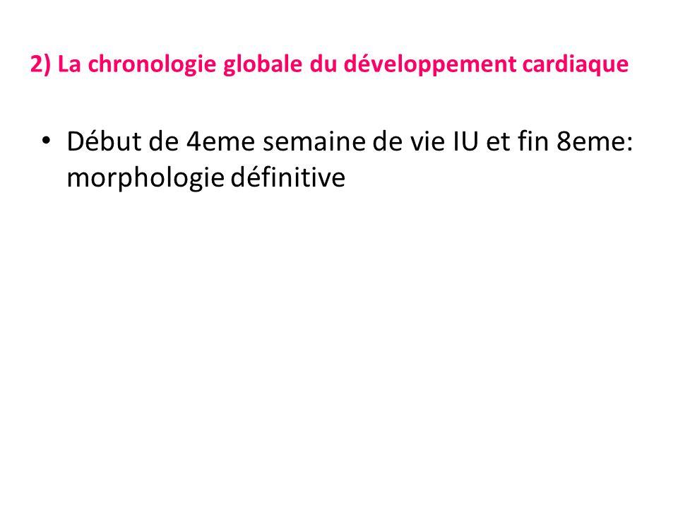 2) La chronologie globale du développement cardiaque Début de 4eme semaine de vie IU et fin 8eme: morphologie définitive