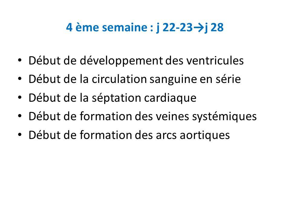 4 ème semaine : j 22-23j 28 Début de développement des ventricules Début de la circulation sanguine en série Début de la séptation cardiaque Début de formation des veines systémiques Début de formation des arcs aortiques