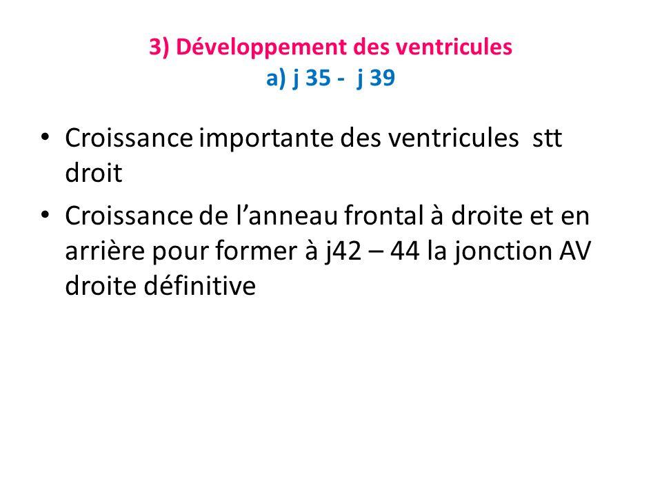 3) Développement des ventricules a) j 35 - j 39 Croissance importante des ventricules stt droit Croissance de lanneau frontal à droite et en arrière pour former à j42 – 44 la jonction AV droite définitive
