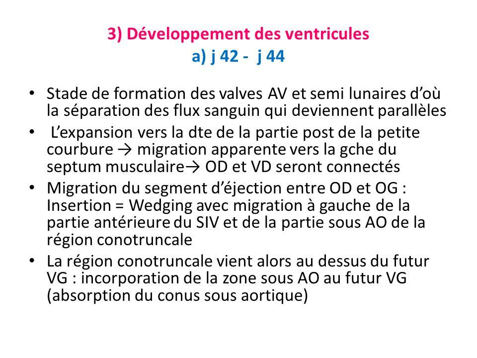3) Développement des ventricules a) j 42 - j 44 Stade de formation des valves AV et semi lunaires doù la séparation des flux sanguin qui deviennent parallèles Lexpansion vers la dte de la partie post de la petite courbure migration apparente vers la gche du septum musculaire OD et VD seront connectés Migration du segment déjection entre OD et OG : Insertion = Wedging avec migration à gauche de la partie antérieure du SIV et de la partie sous AO de la région conotruncale La région conotruncale vient alors au dessus du futur VG : incorporation de la zone sous AO au futur VG (absorption du conus sous aortique)
