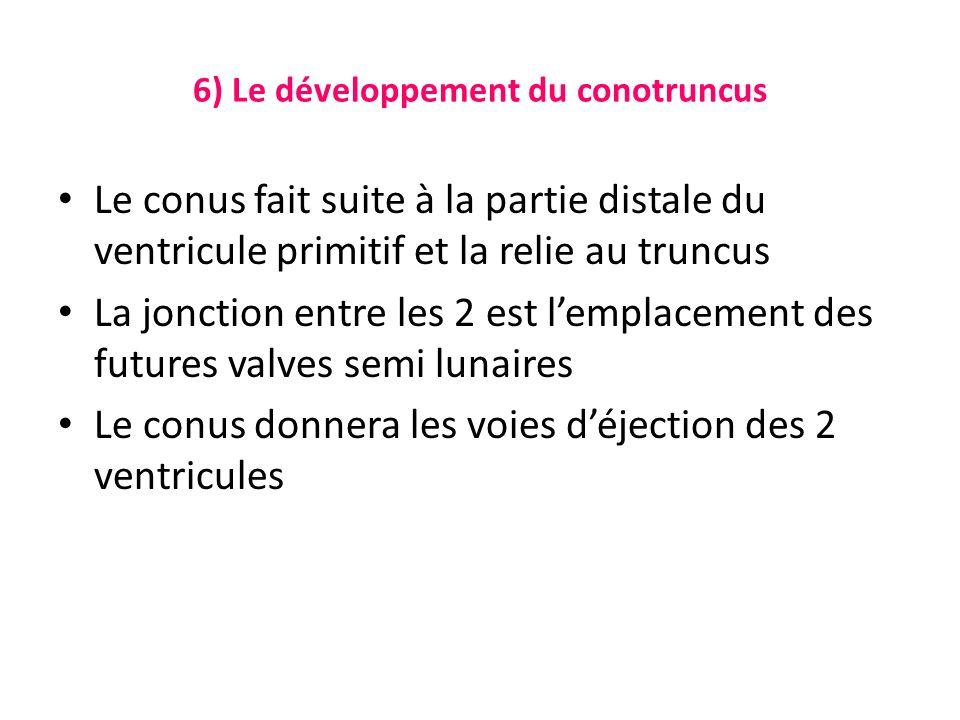 6) Le développement du conotruncus Le conus fait suite à la partie distale du ventricule primitif et la relie au truncus La jonction entre les 2 est lemplacement des futures valves semi lunaires Le conus donnera les voies déjection des 2 ventricules