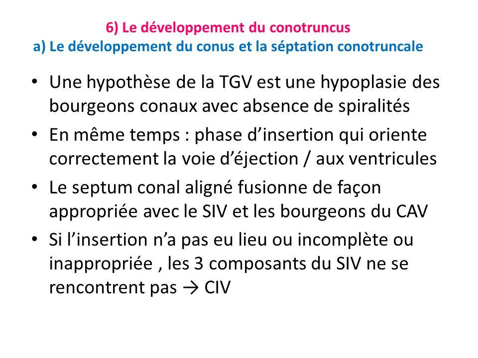 Une hypothèse de la TGV est une hypoplasie des bourgeons conaux avec absence de spiralités En même temps : phase dinsertion qui oriente correctement la voie déjection / aux ventricules Le septum conal aligné fusionne de façon appropriée avec le SIV et les bourgeons du CAV Si linsertion na pas eu lieu ou incomplète ou inappropriée, les 3 composants du SIV ne se rencontrent pas CIV 6) Le développement du conotruncus a) Le développement du conus et la séptation conotruncale