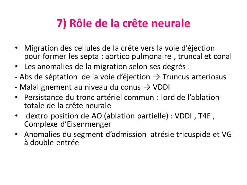 7) Rôle de la crête neurale Migration des cellules de la crête vers la voie déjection pour former les septa : aortico pulmonaire, truncal et conal Les anomalies de la migration selon ses degrés : - Abs de séptation de la voie déjection Truncus arteriosus - Malalignement au niveau du conus VDDI Persistance du tronc artériel commun : lord de lablation totale de la crête neurale dextro position de AO (ablation partielle) : VDDI, T4F, Complexe dEisenmenger Anomalies du segment dadmission atrésie tricuspide et VG à double entrée