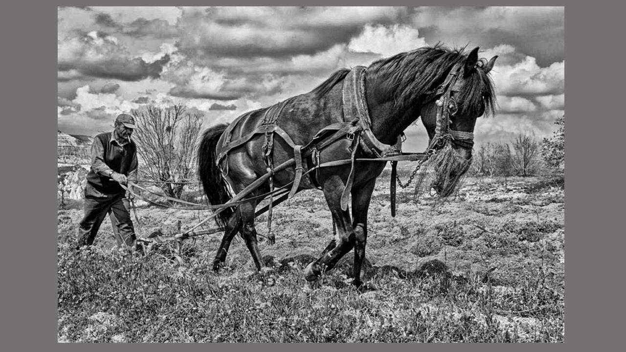 Je pense à la moisson, aux labours, aux vendanges, Aux chevaux quil fallait conduire à labreuvoir, Aux charrettes de foin à poser dans la grange, Au v