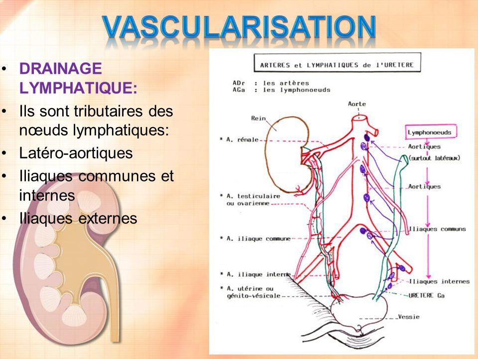 DRAINAGE LYMPHATIQUE: Ils sont tributaires des nœuds lymphatiques: Latéro-aortiques Iliaques communes et internes Iliaques externes
