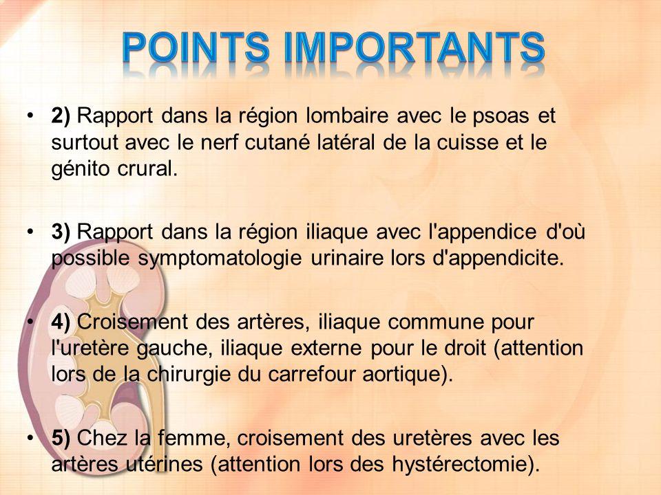 2) Rapport dans la région lombaire avec le psoas et surtout avec le nerf cutané latéral de la cuisse et le génito crural. 3) Rapport dans la région il