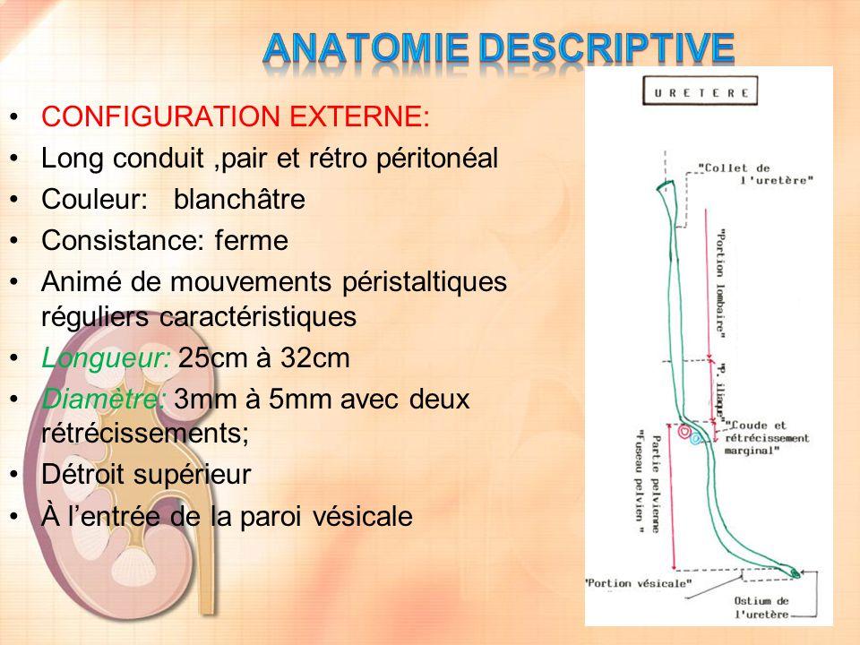En dedans: Le cul-de-sac- para-rectal le sépare de : La face latérale du Rectum
