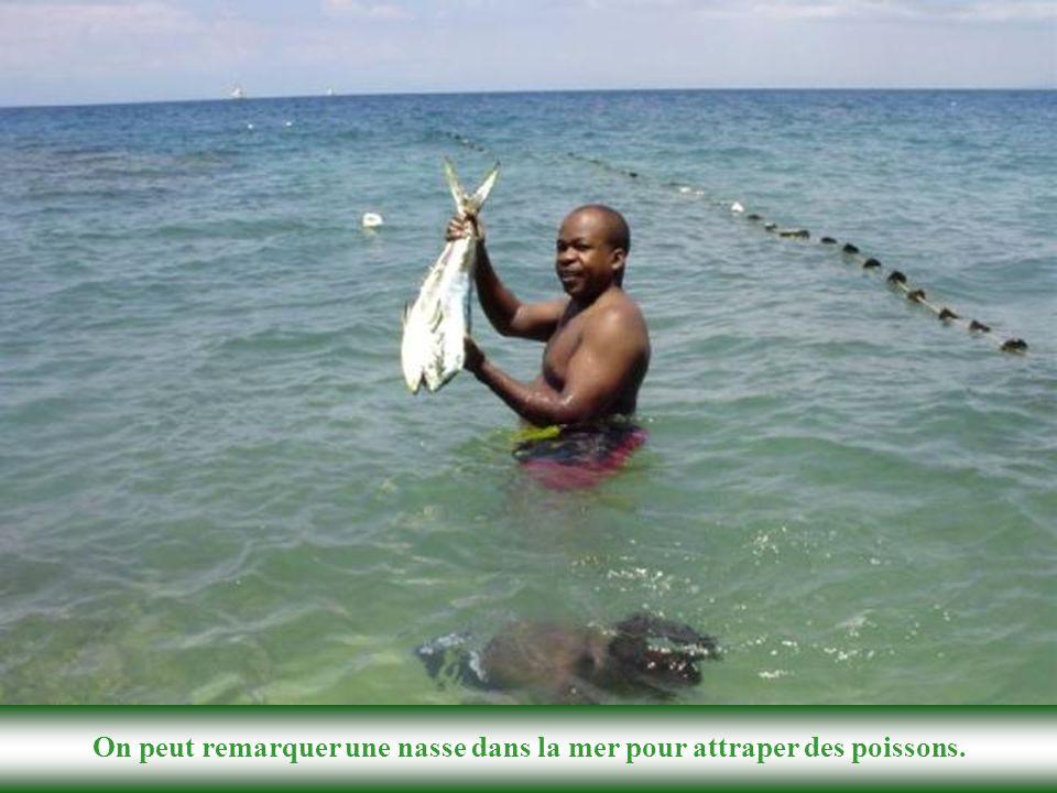 Des randonneurs en jouissant du littoral, préparent un poisson pour le pique-nique. Une vue rapprochée d'une plage à Petit-Goâve avec des galets épais