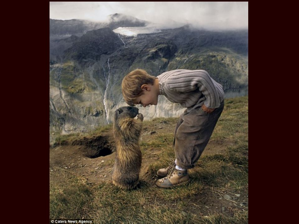 Matteo Walch est surnommé Mowgli par le Daily Mail. Ce garçon de 8 ans a développé une relation unique avec un groupe de marmottes des Alpes, depuis q