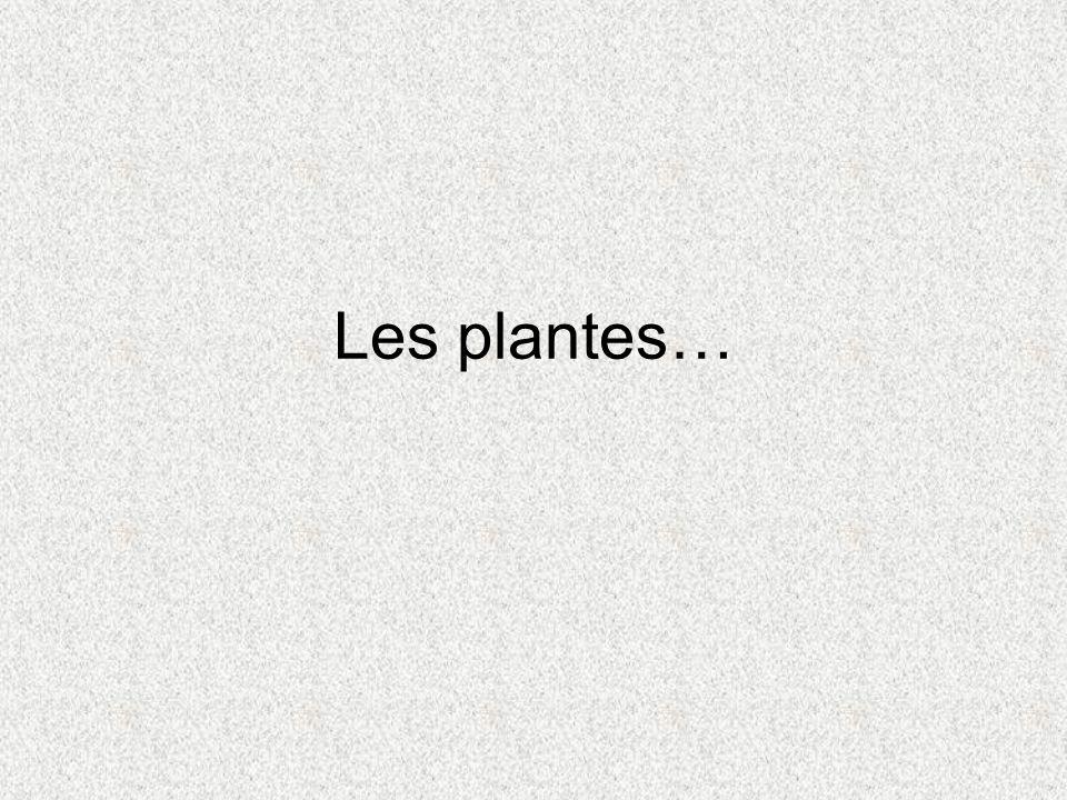 Les plantes…