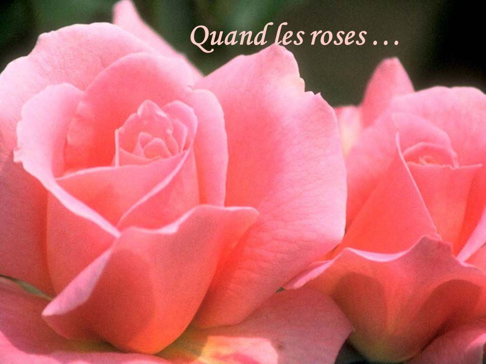 Quand les roses …