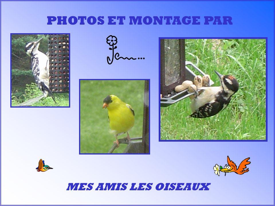 MES AMIS LES OISEAUX PHOTOS ET MONTAGE PAR